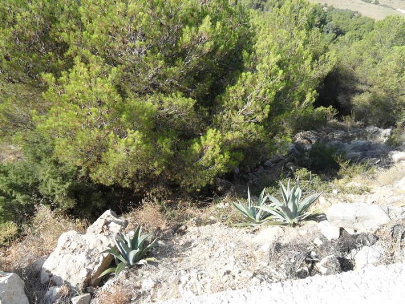 Plot for sale in Javea Castellans Costa Blanca, Spain
